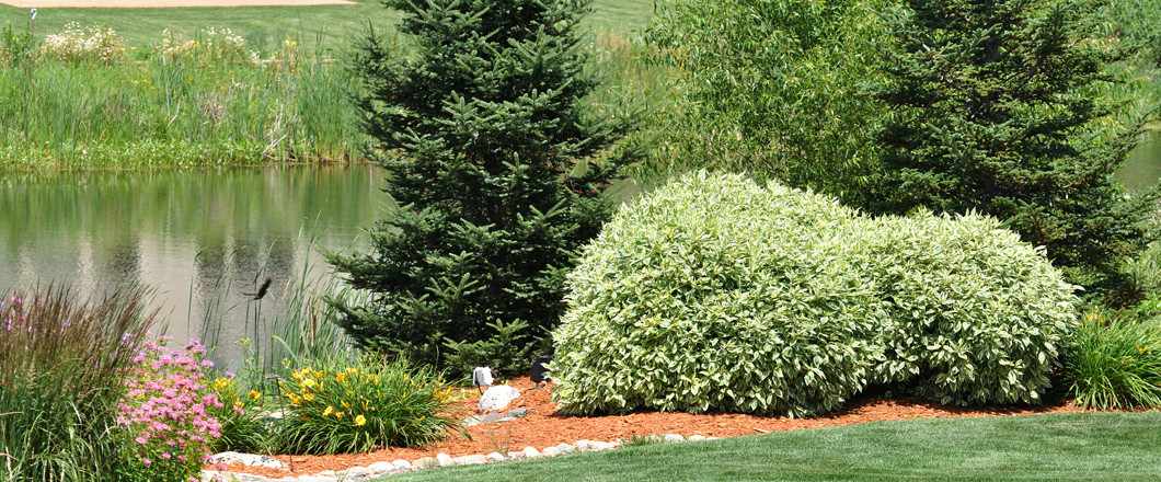 Contact us today and arrange your professional lawn care service inFort Collins, CO